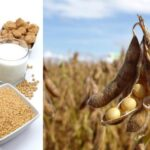 Everything about soy protein