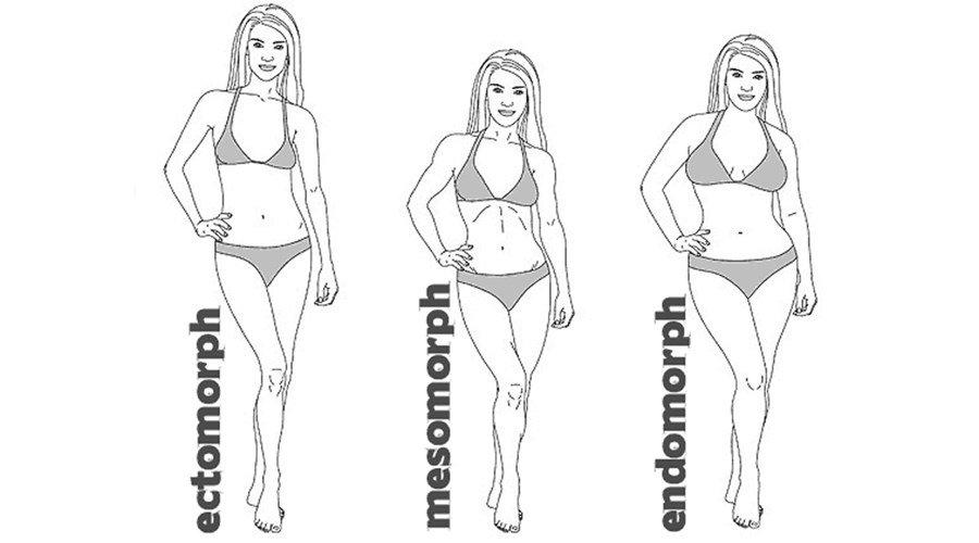 Die 3 Körperbautypen - Fitnessmagnet©