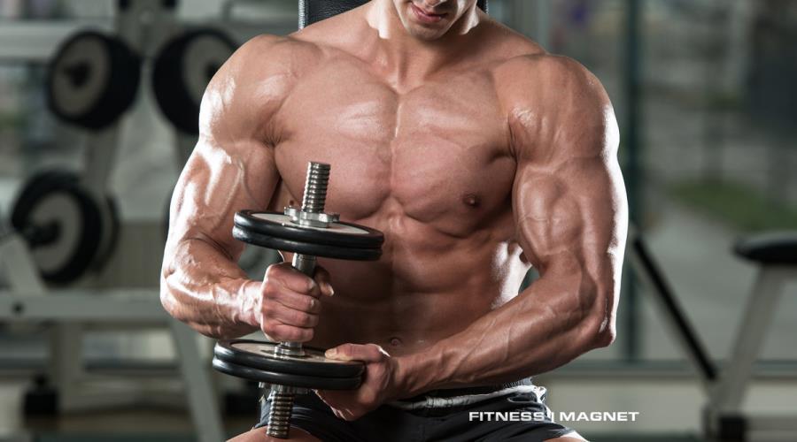Haben Muskeln eine Memory-Eigenschaft? - Fitnessmagnet©